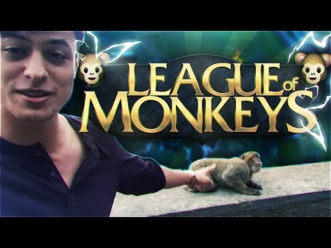 LL STYLISH | LEAGUE OF MONKEYS 🐵  !