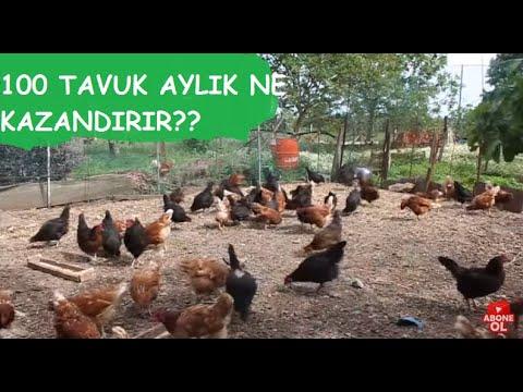 Hiç Para Harcamadan Tavuk Yemliği Ve Suluk Yapımı