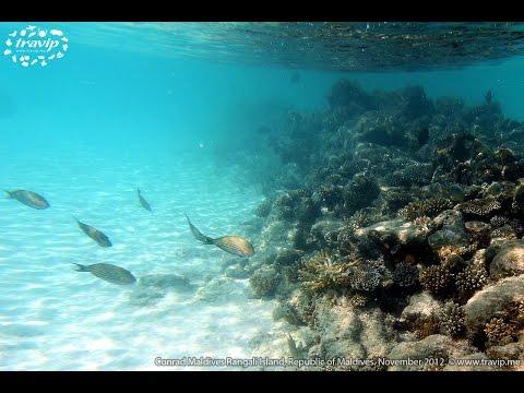 Maldives: A Journey on Tourist Submarine