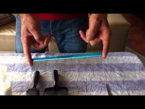 Briard grooming