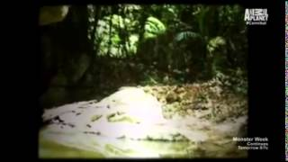The cannibal in the jungle real film