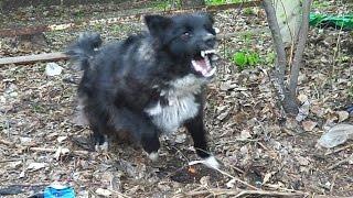 Фото Девушка влёт успокоила бешенного пса