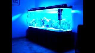 180 Gallon Red Devil Aquarium For Sale