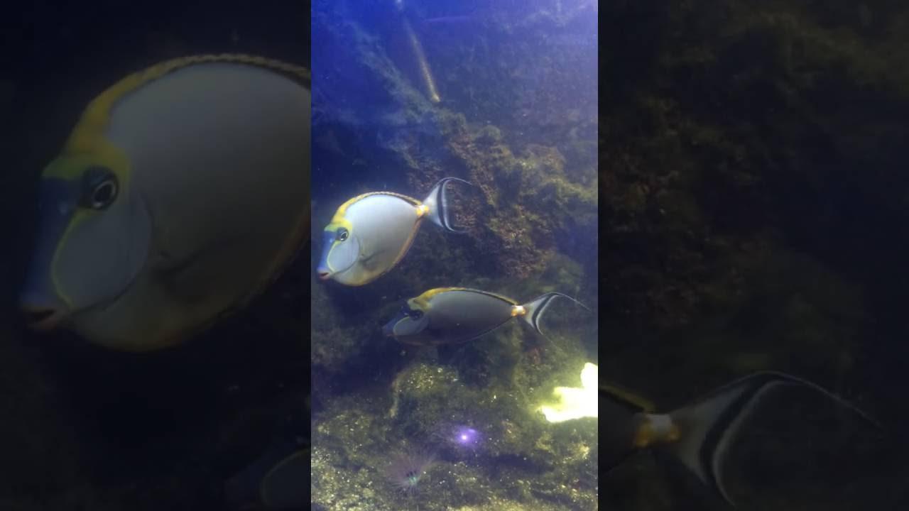 Аквариумных рыбок. У нас в продаже появились следующие наименования живых обитателей аквариума: барбус акулий; гурами: жемчужный, мраморный, золотой; данио: леопардовый, рерио красный; кардинал, пецилия, неон голубой; скалярия мраморная, хасемания, лялиус, рыбка петушок, улитка.
