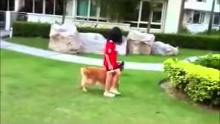 Dog Training Singapore - Our Latest Demo Video