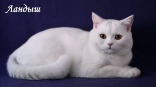 Кошки из домашнего мини-приюта ищут дом.