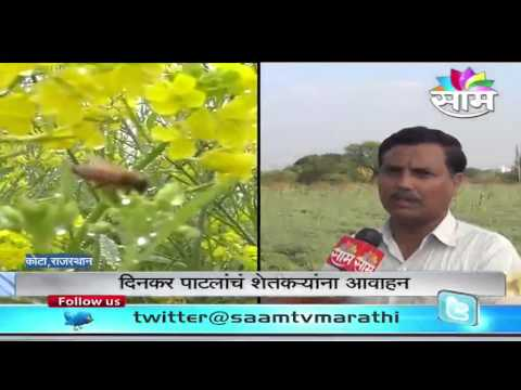 Dinkar Patil explains the 'Importance of honeybees to Environment'