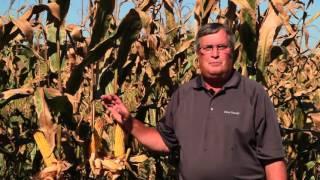 Maximisez sur les hybrides d'ensilage de maïs  BMR | Dow Seeds Canada