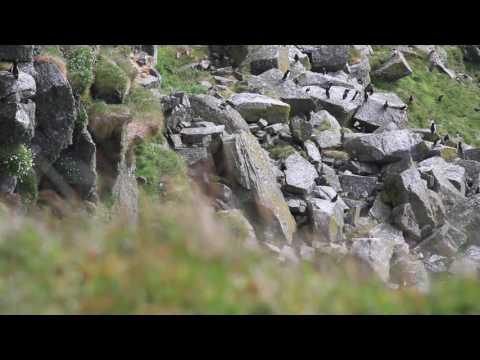 Shiant Isles 2017