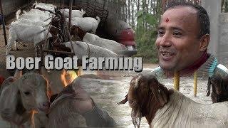 Boer Goat Farming In Nepal (Chitwan) - बोयर क्रान्तीमा किसान || Documentary