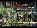 Pancingan Kapas Tembak Bonkar Isian  Mp3 - Mp4 Download