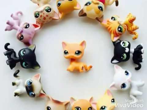 стоячки кошки лпс фото