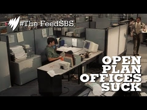 Why Open Plan Offices Suck For Everyone I The Feed