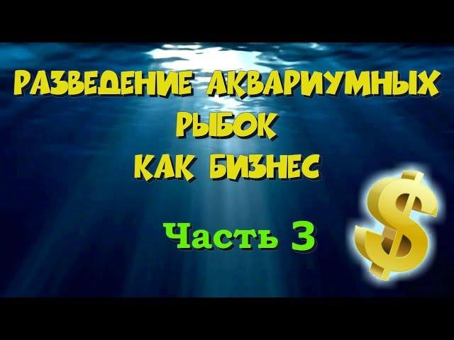 разведение аквариумных рыбок как бизнес 3