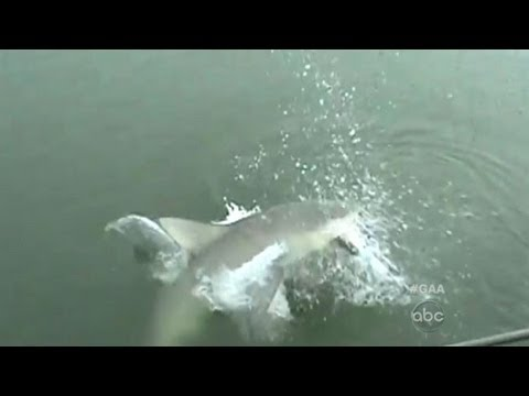 Shark Leaps To Steal Woman's Catch: Caught On Tape