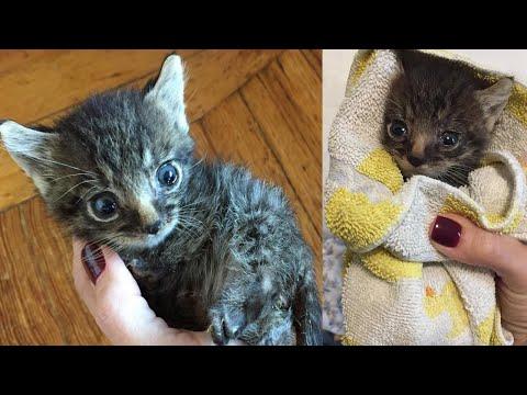 Котик сирота не может за 6 марта