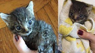 Котик-сирота не может прыгать на диваны и рост у него маловат, но любви хватит на целую Вселенную