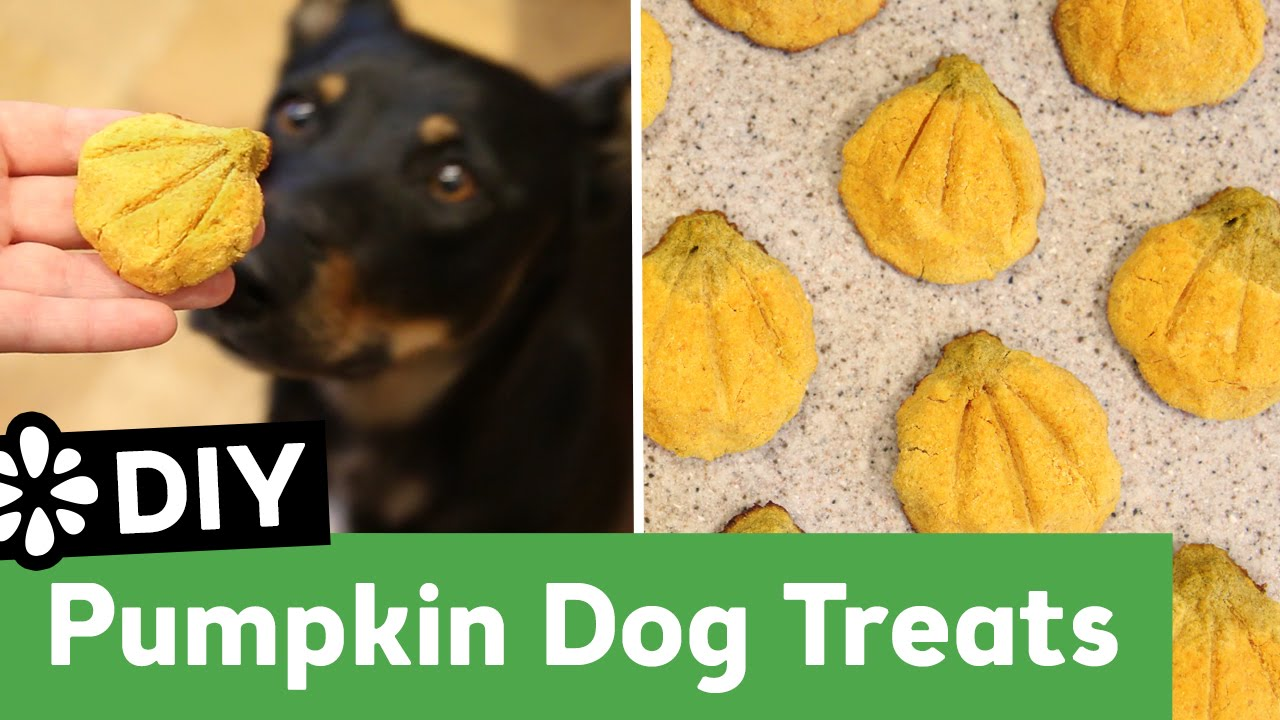 Diy Pumpkin Dog Treats All Natural Grain Free Recipe Sea Lemon
