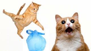 Игрушки для кошки своими руками - целлофановый пакет