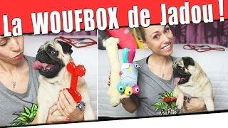 La WoufBox testée par Jadou , femelle Carlin ! #PuggyLove