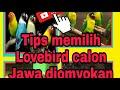 Pecintalovebird Kicaumania Berburuomyokan Trik Memilih Omyokan Prospek Calon Juara  Mp3 - Mp4 Download