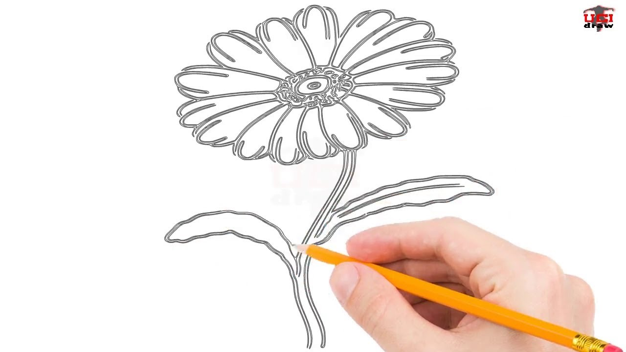 How To Draw A Daisy Step By Step Easy For Kidsbeginners Simple