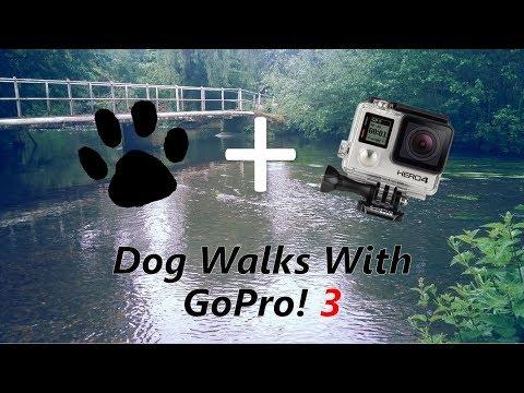 GoPro Dog Walks 3
