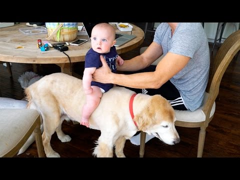 BABY RIDING DOG