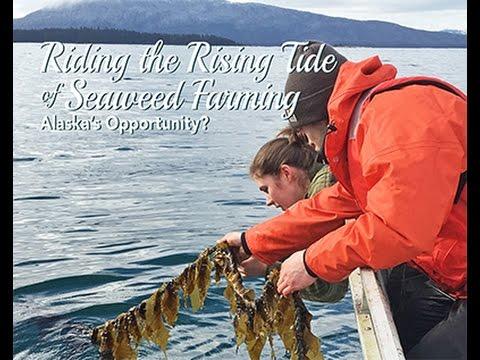 Riding the Rising Tide of Seaweed Farming: Alaska's Opportunity? (webinar 2/28/2017)