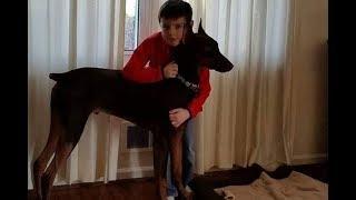 Вот что сделал 10 летний мальчик чтобы спасти свою собаку  Никто не ожидал такой реакции