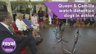 Queen and Camilla,  Duchess of Cornwall watch detection dogs in action