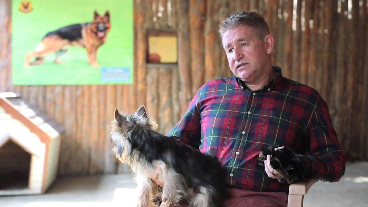 Yorkshire Terrier cinsi köpeklerin boyutları nelerdir ...