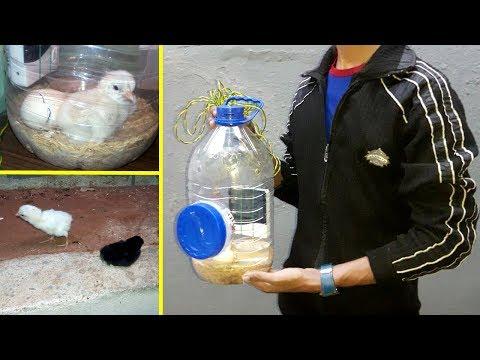 diy-mini-incubator---hatching-chicken-eggs