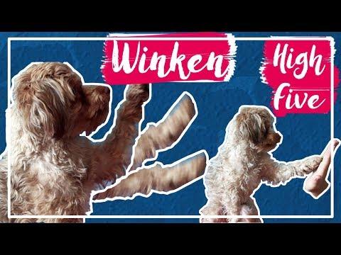 high-five-•-winken- -hundeschule-tricks- -kascha!-(p)