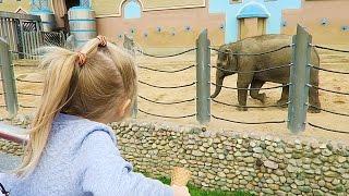 видео Московский зоопарк