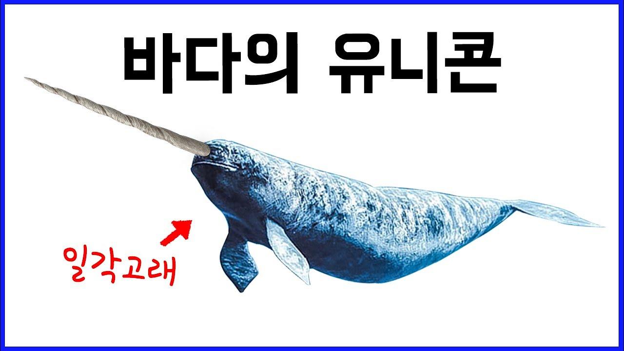 바다 속 특이한 고래 7종!!  - 이빨고래와 수염고래 구분법