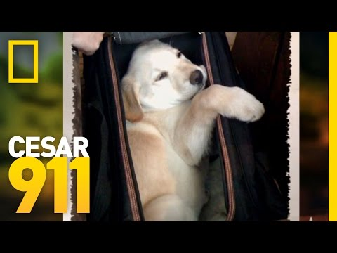 Case File: Beau | Cesar 911