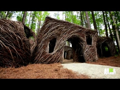 A Treehouse Made Entirely of Branches
