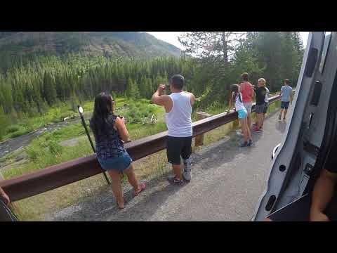 Bear sighting in Yellowstone