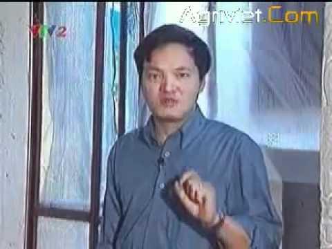 Hướng dẫn kỹ thuật trồng nấm rơm trong nhà - 01