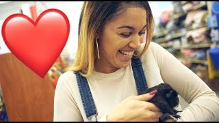 SURPRISING MY WIFE WITH A NEW PET ❤️ | THE PRINCE FAMILY
