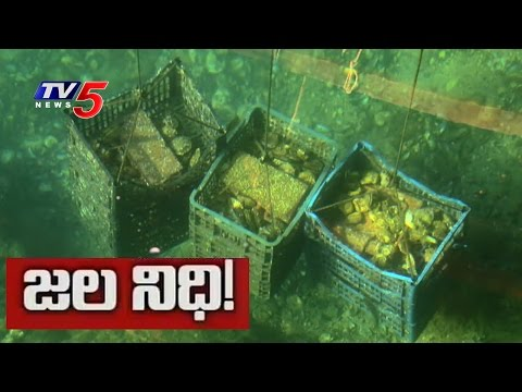 A History of Sunken Treasure Ships in Seas | Daily Mirror | TV5 News