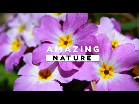 Beautiful Nature Video in Full HD - Spring Season - Gamarvan Village - Episode 1 - 8 Minute