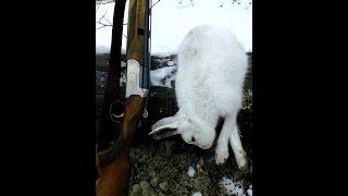 Охота на зайца загоном
