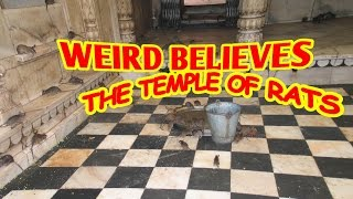 the temple of rats - weird believes - karibian6600