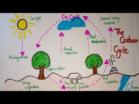 how to draw carbon cycle diagram youtube. Black Bedroom Furniture Sets. Home Design Ideas