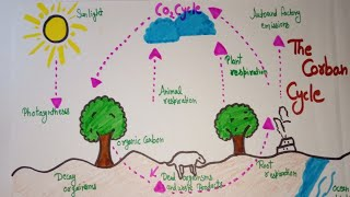 How to draw carbon cycle diagram