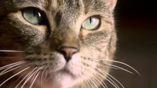 Freeview TV Teaser - Cat & Budgie #catandbudgie