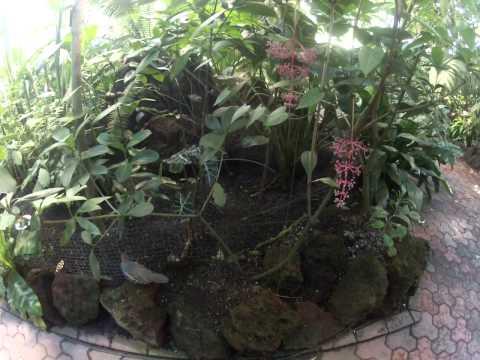 2013-11-24 Cybiotic Interaction Class (Botanical Gardens Field Trip)