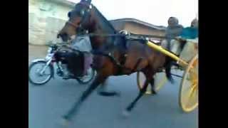 sialkot horse tanveer heera kotli loharan
